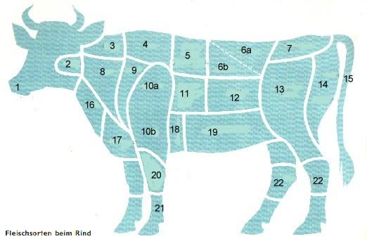 Kuh Körperteile